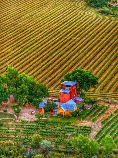 Sutcliffe Vineyards, Cortez, CO